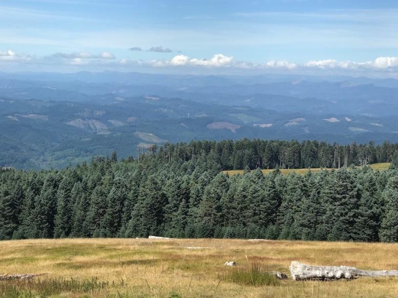 marys-peak-summit